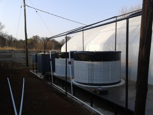 seperate greenhouse for fish tanks